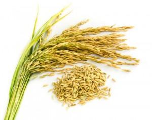 Apesar de diminuir a área plantada de arroz, Mato Grosso terá maior produtividade