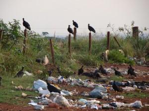 Lixo doméstico e animais mortos estão sendo jogados as margens da MT 225 no trecho entre Vera/Feliz Natal